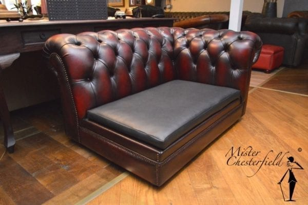 chesterfield_hondenmand